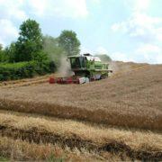 PAESAGGIO_4_azienda-agricola